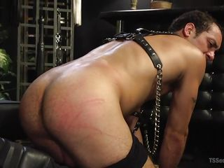 male slave gets whipped hard and has to lick shemale ass, and suck tranny cock